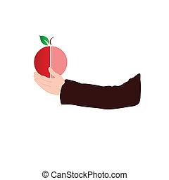 couleur, fruit, vecteur, main