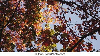 couleur, multiple, garden., footage., prise vue., coloré, arbres, appareil photo, prores, nuances, teinté, 422, diapo, arbre diverge, cercle, automne, surprenant