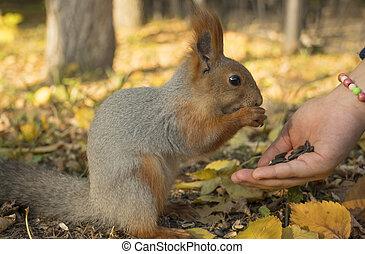 couleur, nature., graines, main, queue, rodent., pelucheux, dehors, grignote, tenue, seeds., squirrel., zoologie, winter., mammifères, changements, close-up., écureuil, mange, petit