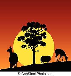 couleur, vecteur, animal, nature