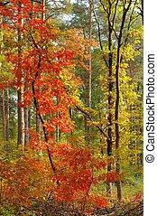 couleurs, automne