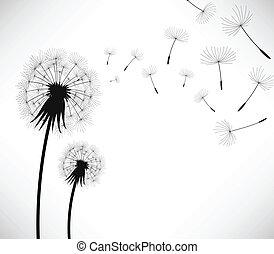 coup, fleur, vent, pissenlit