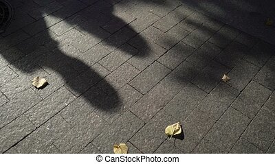 couple, agréable, ombre, asphalte
