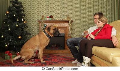 couple, chien
