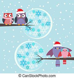 couples, hiboux, hiver, oiseaux