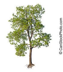 coupure, arbre, isolé, racines