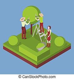 coupure, jardinage, agriculture., agriculture arbre, pruner.