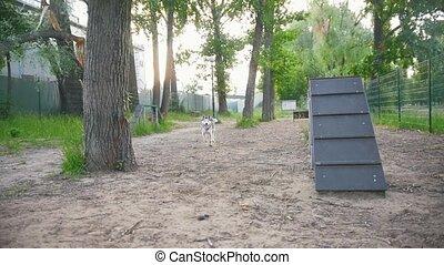 courant, parc, deux, chiens