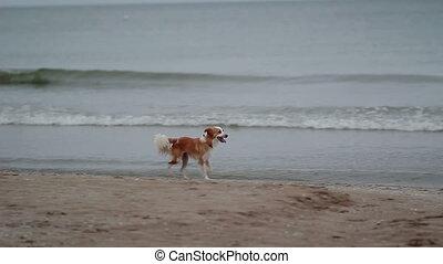 courant, plage, chien, perdu