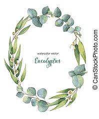 couronne, eucalyptus, vecteur, aquarelle, feuilles, ovale, vert, branches.