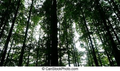 couronne, panoramique, forêt, arbres