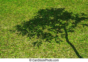 court, printemps, arbre, vert, ombre, herbe