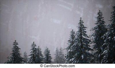 couvert, arbres hiver, neige, flanc montagne, cône