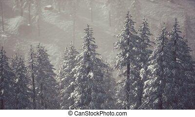couvert, cône, hiver, flanc montagne, arbres, neige