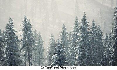 couvert, cône neige, arbres, flanc montagne, hiver