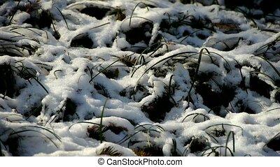 couvert, mouvementde va-et-vient, herbe, neige, wind.