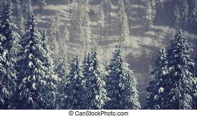 couvert, neige, arbres, cône, flanc montagne, hiver