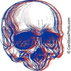 crâne, 3d
