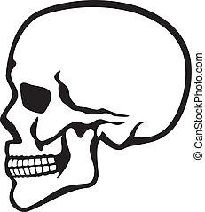 crâne humain, profil