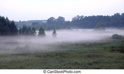 crépuscule, épais, brouillard, creeps, forêt