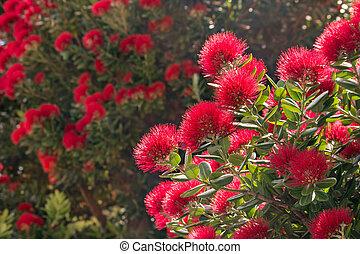cramoisi, fleur, fleurs, arbre, pohutukawa