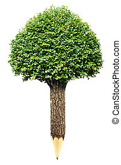 crayon bois, blanc, arbre, fond