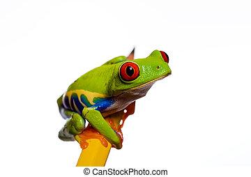 crayon, grenouille
