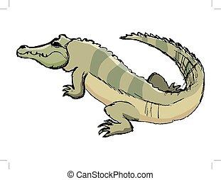 crocodile, croquis