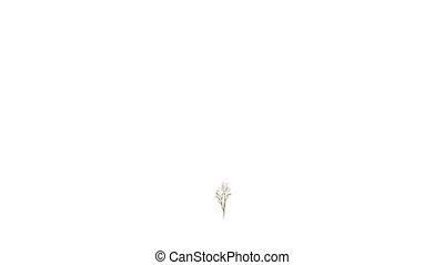 croissant, arrière-plan., blanc, arbre