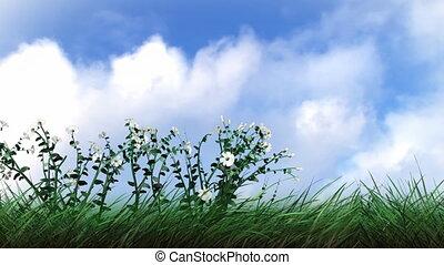 croissant, fleurs, usines