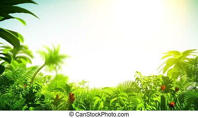 croissant, forêt tropicale