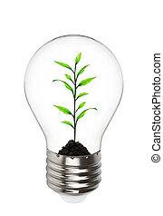 croissant, lumière, plante, intérieur, ampoule