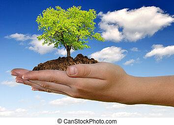 croissant, main, arbre
