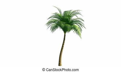 croissant, palmier, canal, alpha
