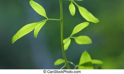 croissant, plante, jeune