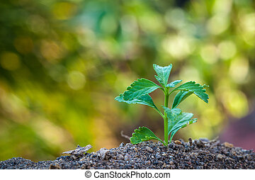 croissant, plante