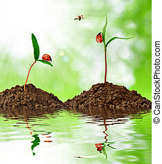 croissant, plante verte