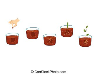croissant, processus, plante