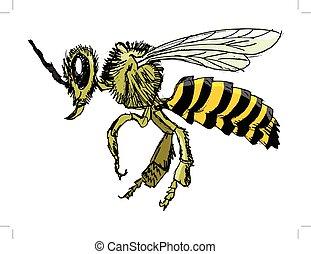 croquis, abeille