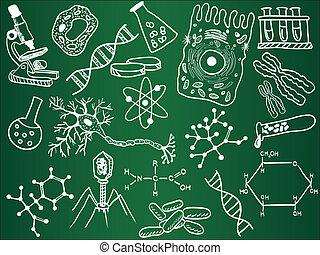 croquis, biologie, école, planche