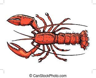 croquis, homard
