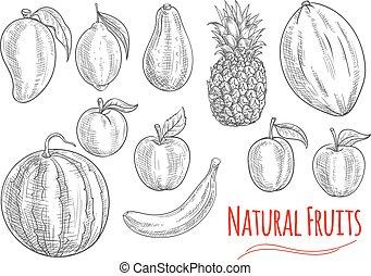 croquis, nourriture, boisson, conception, fruits, frais
