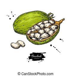 croquis, organique, superfood, baobab, drawing., vecteur, nourriture, esprit, sain