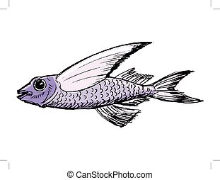 croquis, poisson volant