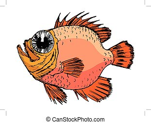 croquis, rockfish
