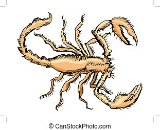 croquis, scorpion