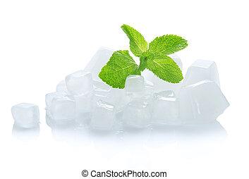 cubes, feuilles, jeune, glace, vert, menthe verte