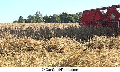 cultures, grain, moissonneuse, combiner, 4k, céréale, battre, summer.