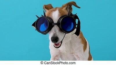 cyberpunk, chien, fantasme, lunettes