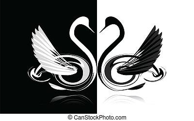 cygne blanc, noir